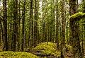 Bosque junto al glaciar Davidson, Haines, Alaska, Estados Unidos, 2017-08-18, DD 52.jpg