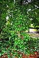 Botanic garden limbe7.jpg