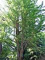 Botanischer-garten-ffm014.jpg