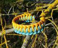 Bracelet de survie - Genoese.png