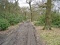 Bridle path at Houghton Moor - geograph.org.uk - 140264.jpg