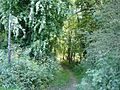 Bridleway - geograph.org.uk - 184558.jpg