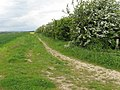 Bridleway SE of Firsby Hall Fm - geograph.org.uk - 806839.jpg