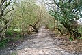 Bridleway to Hunter Hill House - geograph.org.uk - 1253014.jpg
