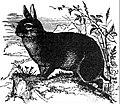 Britannica Rabbit.jpg