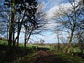 Bromesberrow Estate Woodland Walk - geograph.org.uk - 462022.jpg