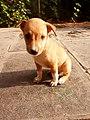 Brown Puppy.jpg