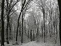 Buchholzer Forst 30.JPG