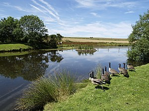 Buckton - Duck pond, Buckton