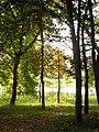 Bujny widok drzew w parku dworskim.jpg