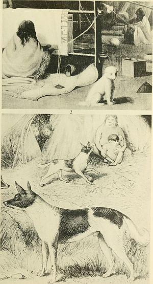 Fuegian dog - Fuegian dog (lower image)