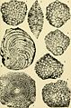 Bulletins of American paleontology (1958-1959) (20316413039).jpg
