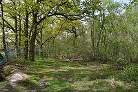 Bullock Wood 10.JPG