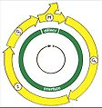 Bunecny cyklus1.jpg