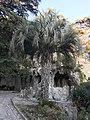 Butia odorata - Nîmes Jardin de la fontaine (nov 2020).jpg