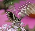 Butterfly 1a (4867230102).jpg