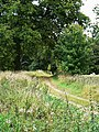 Byway, near Finstock - geograph.org.uk - 1516381.jpg