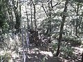 Cabres salvatges al Parc'Ours 20180730 112041.jpg