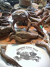 A selection of cane toad merchandise, including key rings made from their legs, a coin purse made from the head, front limbs and body of a toad, and a stuffed cane toad