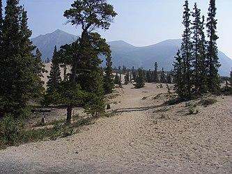 Carcross Desert 2009.jpg