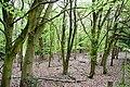 Castle Hill - geograph.org.uk - 1524851.jpg
