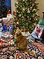 Cat under Christmas tree.jpg