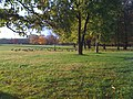 Catherine Chevalier Woods Forest Preserve - panoramio (5).jpg