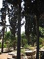 Cemetery of Kibutz Yagur IMG 2941.JPG