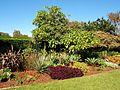 Centennial park in Sydney (12).jpg