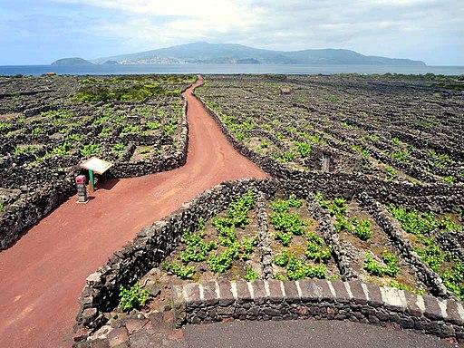 Weinbaukulturlandschaft der Insel Pico. Vineyards (UNESCO-Welterbe der Azoren; Portugal)