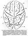 "Cerebral hemispheres, ""Convolutions of the Human Brain"" 1873 Wellcome L0001998.jpg"