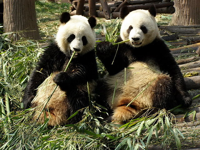 Pandas Food And Drink