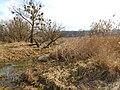 Cherkas'kyi district, Cherkas'ka oblast, Ukraine - panoramio (235).jpg