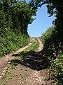 Chivelstone Bridleway 7 - geograph.org.uk - 843965.jpg