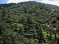 Chypre Troodos Vallee Des Cedres 17062014 - panoramio.jpg