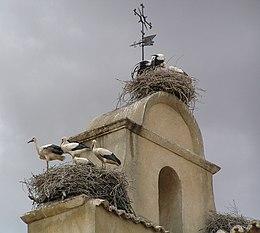 Három gólyafészek, közülük a középsőben és a felénk nézőben három-három madárral