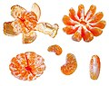 Citrus fruits on white background.jpg