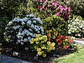 City of London Cemetery - Mixed rhododendron bed.jpg