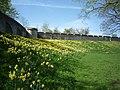City walls in Spring - geograph.org.uk - 2356228.jpg