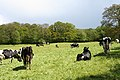 Clayhidon, near Burcombe Farm - geograph.org.uk - 174116.jpg