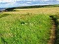 Coastal Grassland near Horden - geograph.org.uk - 488136.jpg