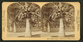 Cocoanut (coconut) trees in the white sands of Florida, U.S.A, from Robert N. Dennis collection of stereoscopic views 8.png