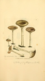 Coloured Figures of English Fungi or Mushrooms - t. 363.png