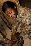 Combat Stress Dog Maj. Eden visits the soldiers of the 365th Engineer Battalion 140125-A-ZH506-008.jpg