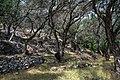 Corfu Olive Garden (9702208891).jpg