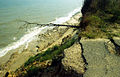 Covehithe Cliffs - geograph.org.uk - 39215.jpg