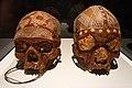 Cráneos de ancestros del pueblo Milingimbi. Museu Etnològic de Barcelona 01.jpg