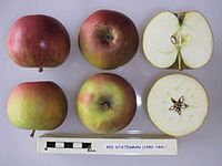 Cross section of Red Statesman, National Fruit Collection (acc. 1950-144).jpg