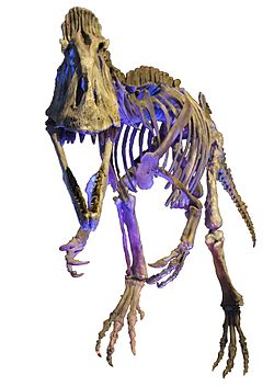 Cryolophosaurus MDSNDB White Background.jpg
