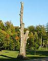Czluchow, park, tree.JPG